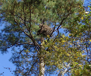 The Eagle Cam nest as seen from the ground