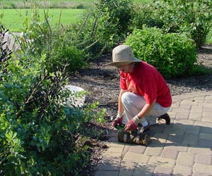 Friends volunteer working in the Blackwater NWR Butterfly Garden
